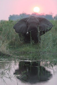 Botswana Eco destination elephant