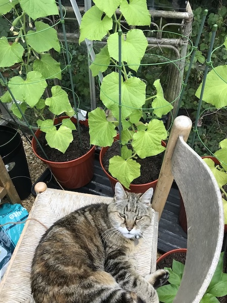 Guard cat on duty in the greenhouse